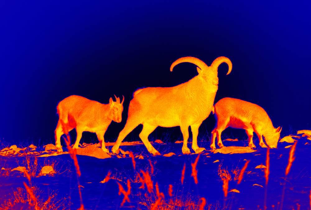 Mejores visores térmicos observando animales salvajes
